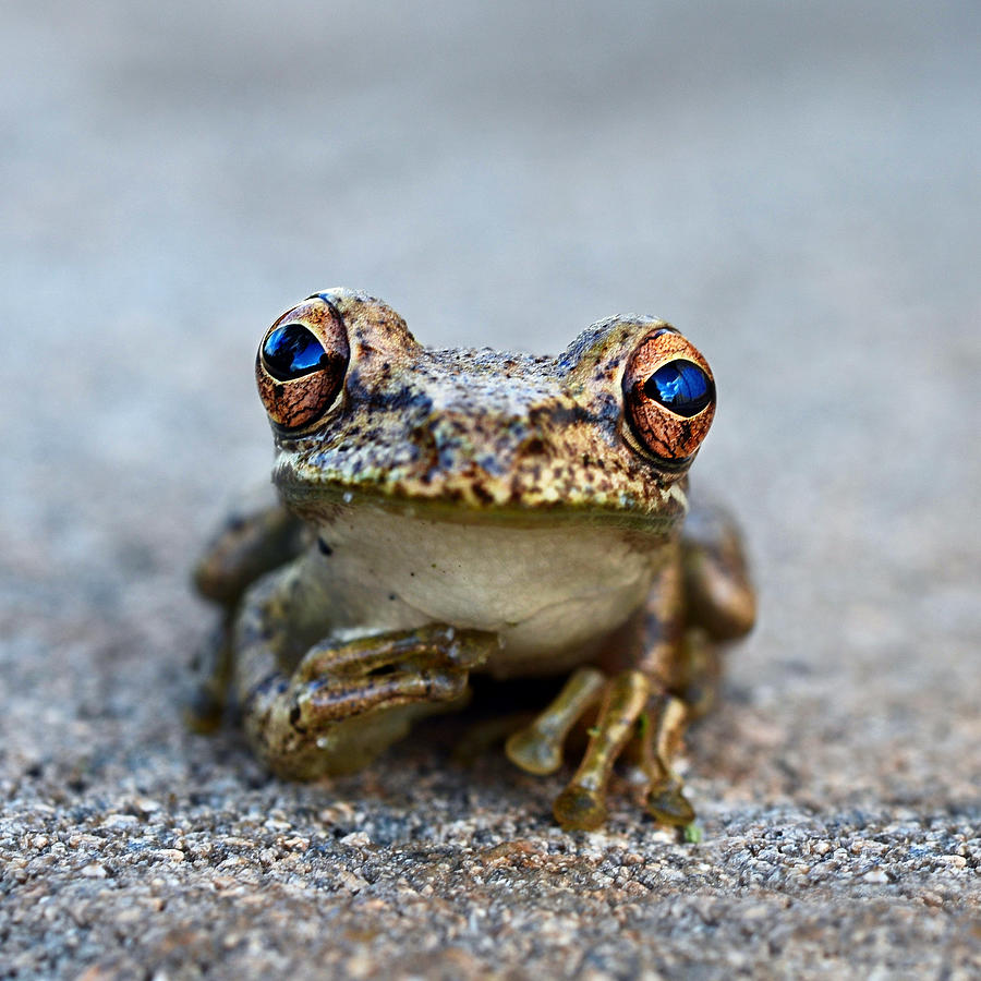 Whimsical Photograph - Pondering Frog by Laura Fasulo