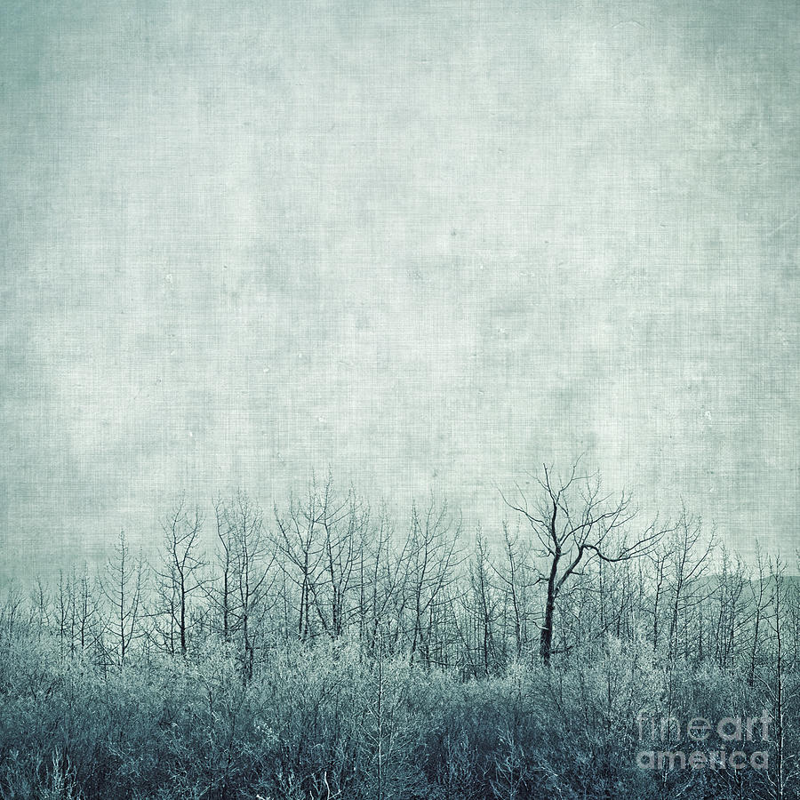 Trees Photograph - Pondering Silence by Priska Wettstein