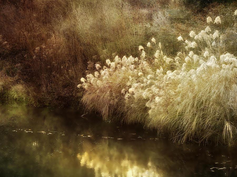 Landscape Photograph - Ponds Edge by Julie Palencia