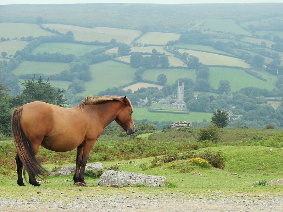 Ancient Photograph - Pony Atop Hill by Jf Halbrooks