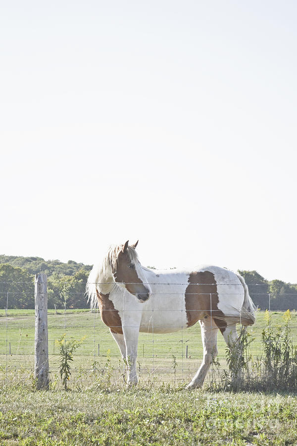 Pony Pride by Traci Cottingham