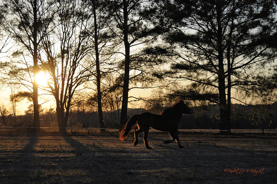 Nature Photograph - Ponys Evening Pasture Trot by Paulette B Wright