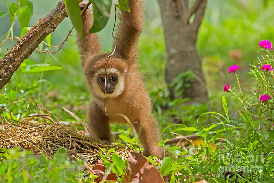 Khao Kheow Open Zoo Photograph - Poor Little Gollum by Ashley Vincent