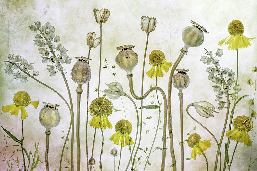 Poppy Photograph - Poppies And Helenium by Mandy Disher