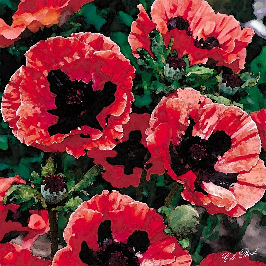 Artwork Painting - Poppies by Cole Black