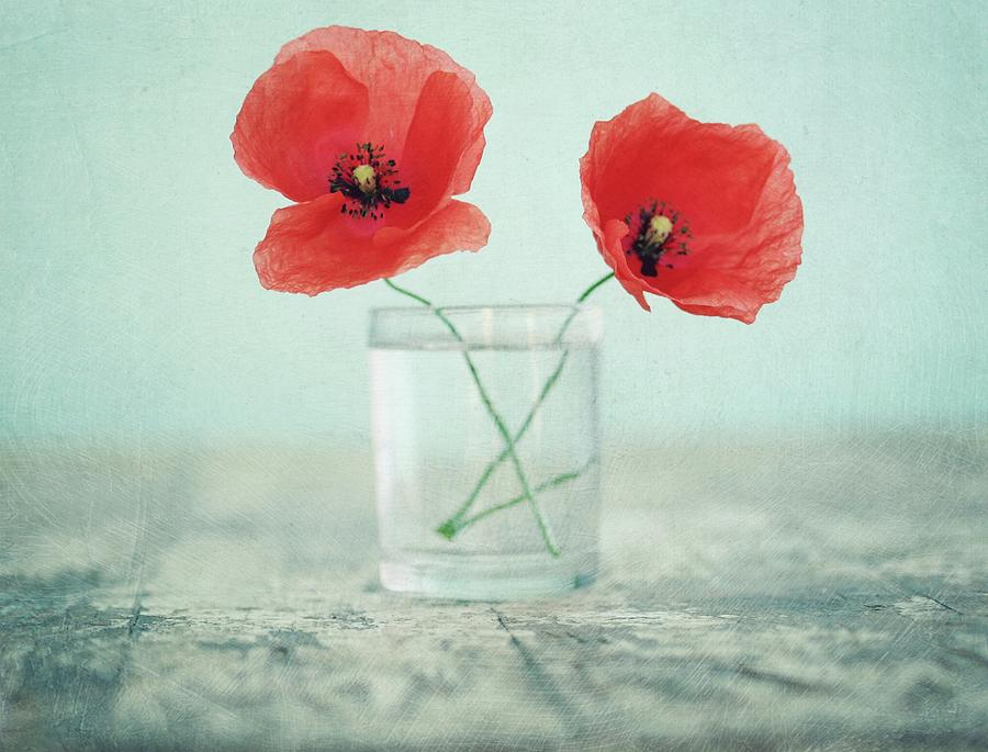 Poppies In A Glass, Still Life Photograph by By Julie Mcinnes