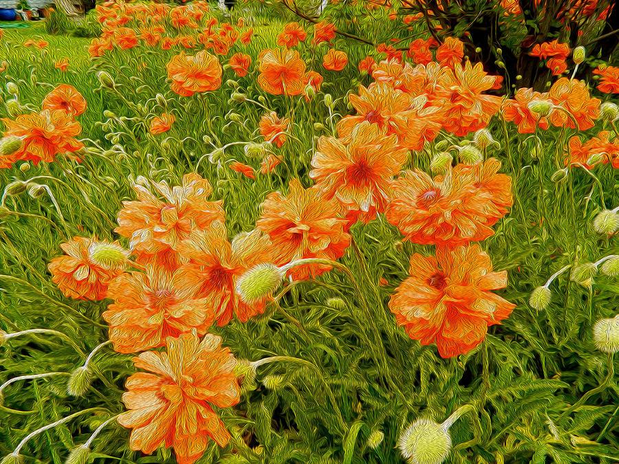 Jamestown Digital Art - Poppies Jamestown Oil 2 by Dee Meyer