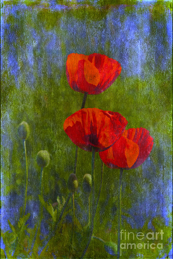 Art Photograph - Poppies by Veikko Suikkanen