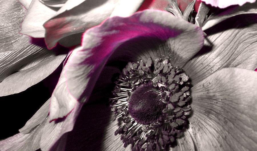 Flower Photograph - Poppy Eye by Sharon Costa