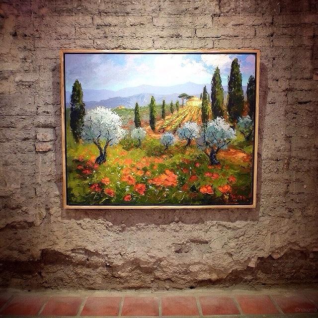 poppy Fields, Tuscany By Evelyne Photograph by Natasha Marco