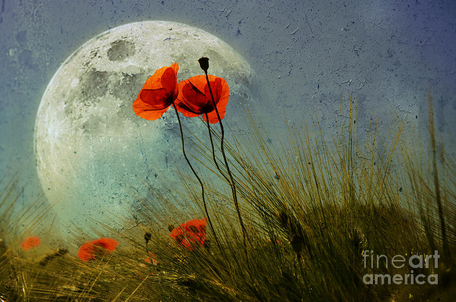 Silence Photograph - Poppy In The Moon by manhART