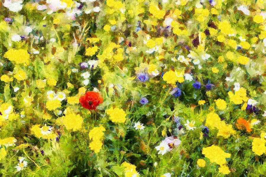 Poppy In Wildflowers Photograph