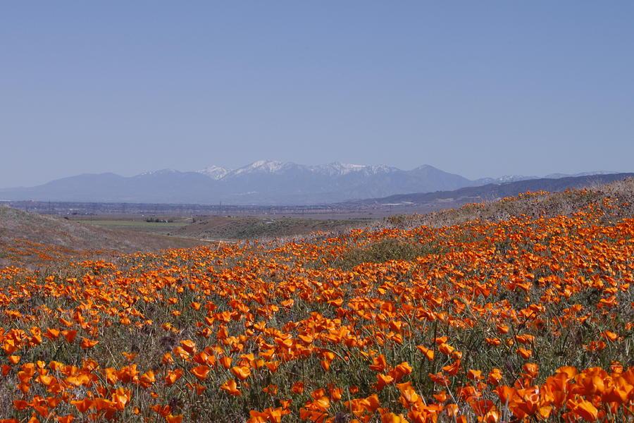 Landscape Photograph - Poppy Land by Ivete Basso Photography