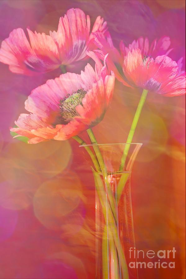 Poppy Photograph - Poppy Passion by Jan Bickerton