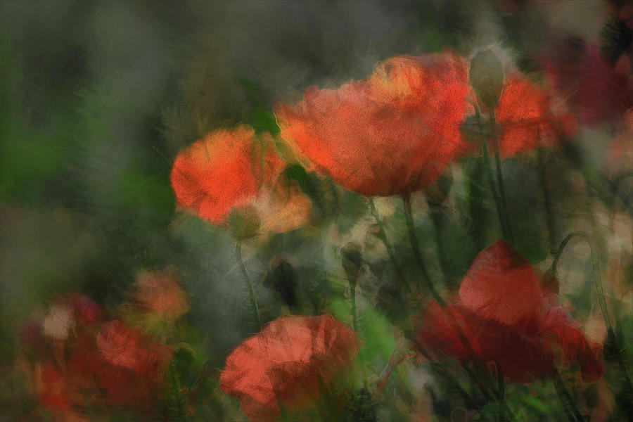 Flowers Photograph - Pops by Gilbert Claes