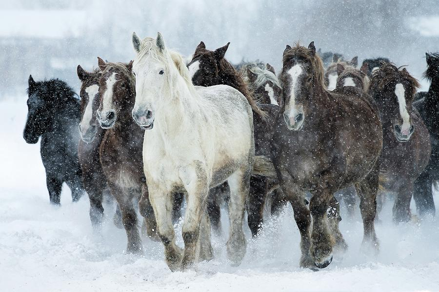 Populations Of Horses Photograph by Makienis Photo