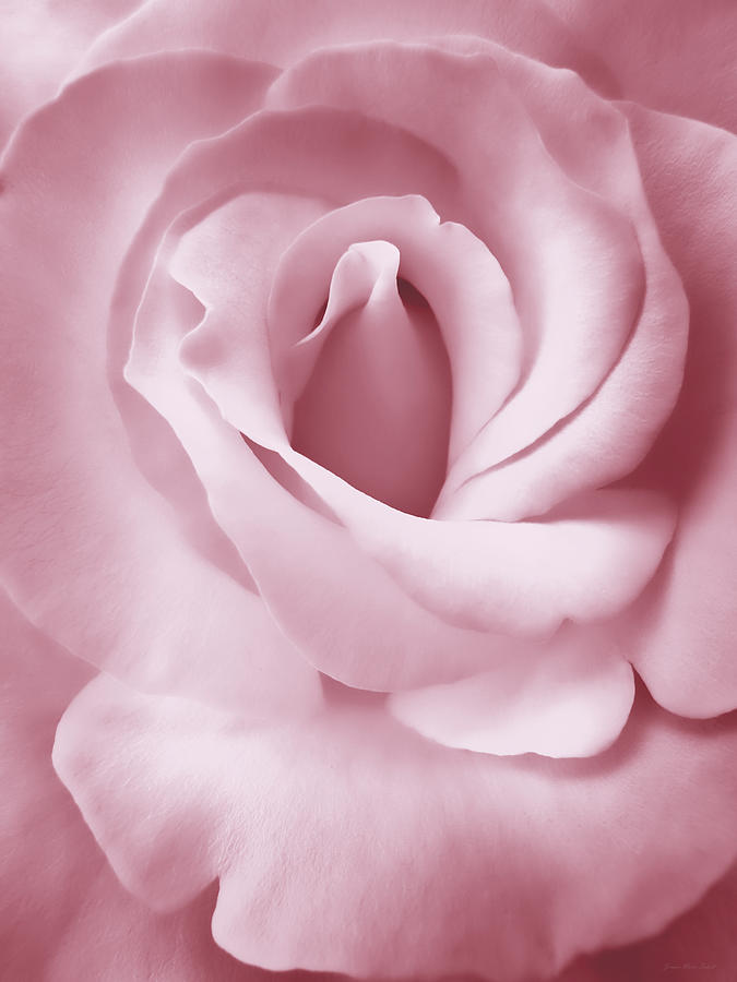 Rose Photograph - Porcelain Pink Rose Flower by Jennie Marie Schell