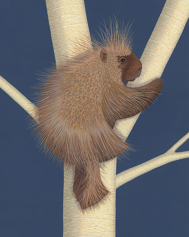 Painting Painting - Porcupine by Nathan Marcy
