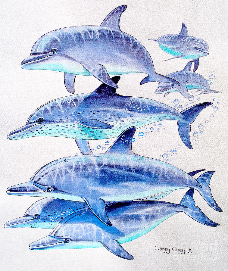 Porpoise Painting - Porpoise Play by Carey Chen