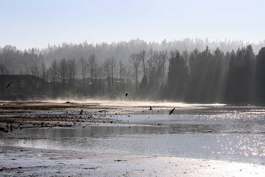 Rocky Point Haze by Stefan Kaertner