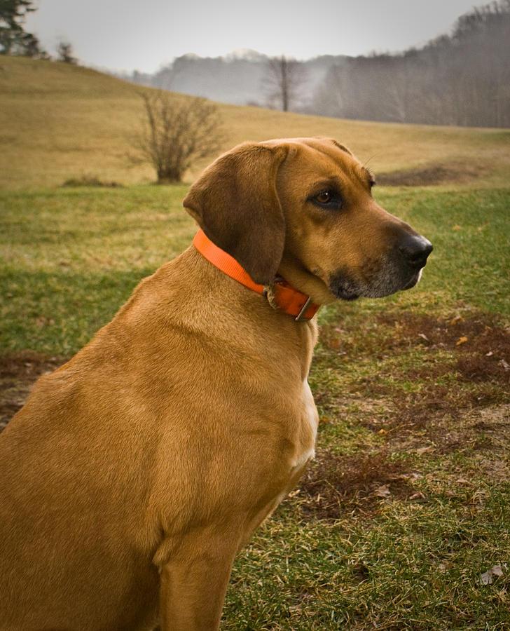 Dog Photograph - Portrait Of A Dog by Douglas Barnett