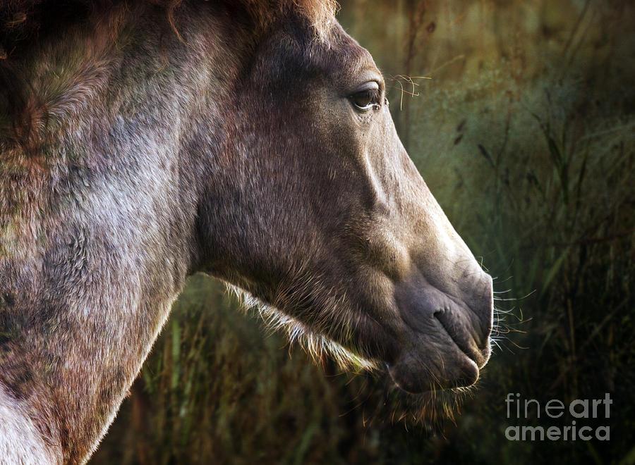 Pony Photograph - Portrait Of A Dreaming Horse by Angel Ciesniarska