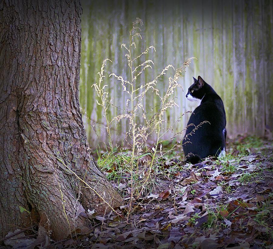 2d Photograph - Portrait Of A Feline by Brian Wallace
