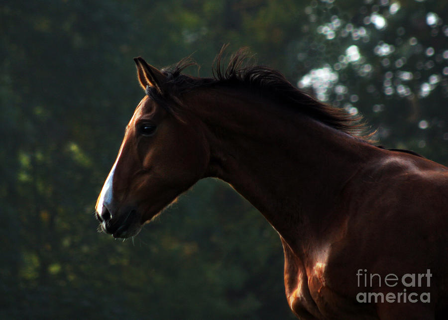 Horse Photograph - Portrait Of A Horse by Angel Ciesniarska
