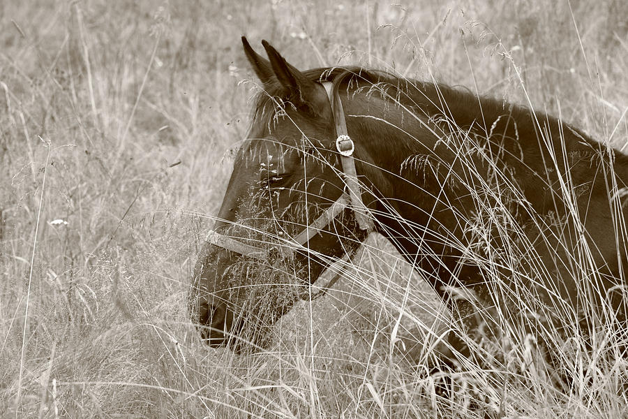 Nature Photograph - Portrait of a horse by Ulrich Kunst And Bettina Scheidulin