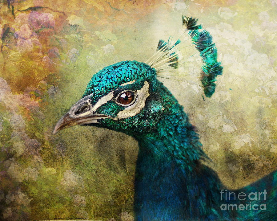 Peacock Photograph - Portrait Of A Peacock by Pauline Fowler