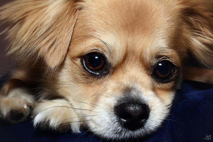 Puppy Photograph - Portrait Of A Pup by Lisa Knechtel