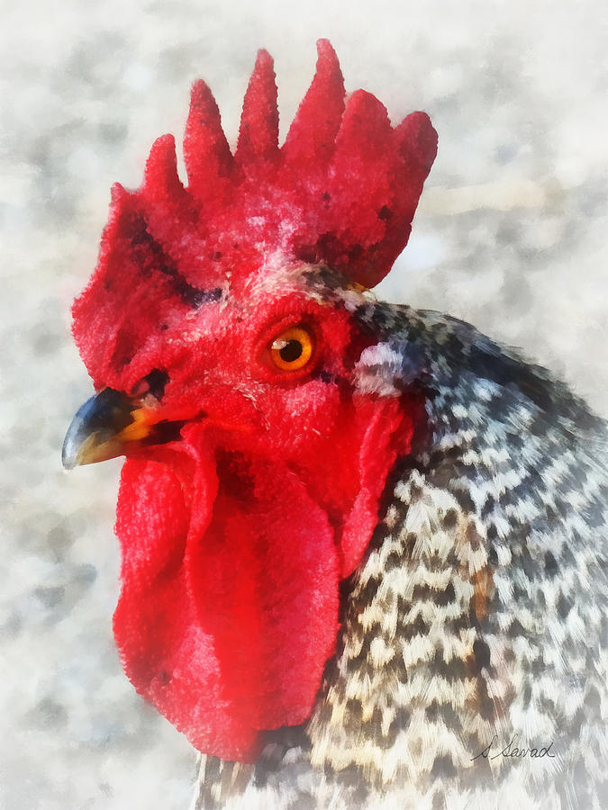 Chicken Photograph - Portrait Of A Rooster by Susan Savad