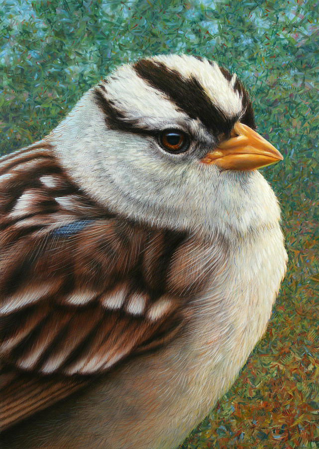 Sparrow Painting - Portrait Of A Sparrow by James W Johnson