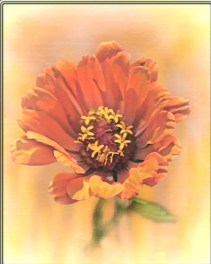 Flora Photograph - Portrait Of A Zinnia by Larry Bishop