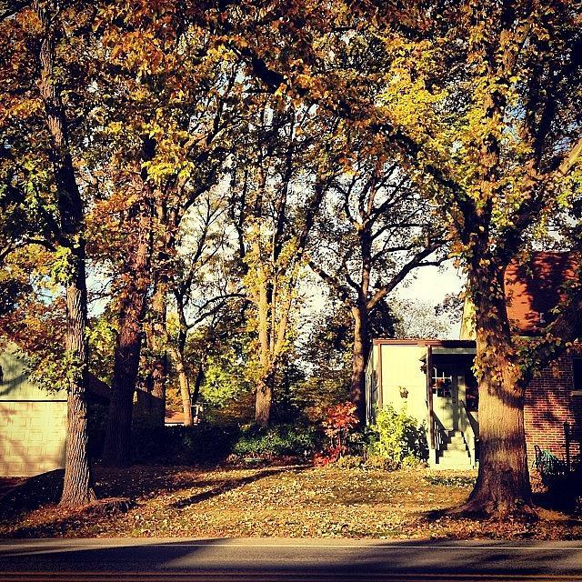 Autumn Photograph - Portrait Of Autumn by Frank J Casella