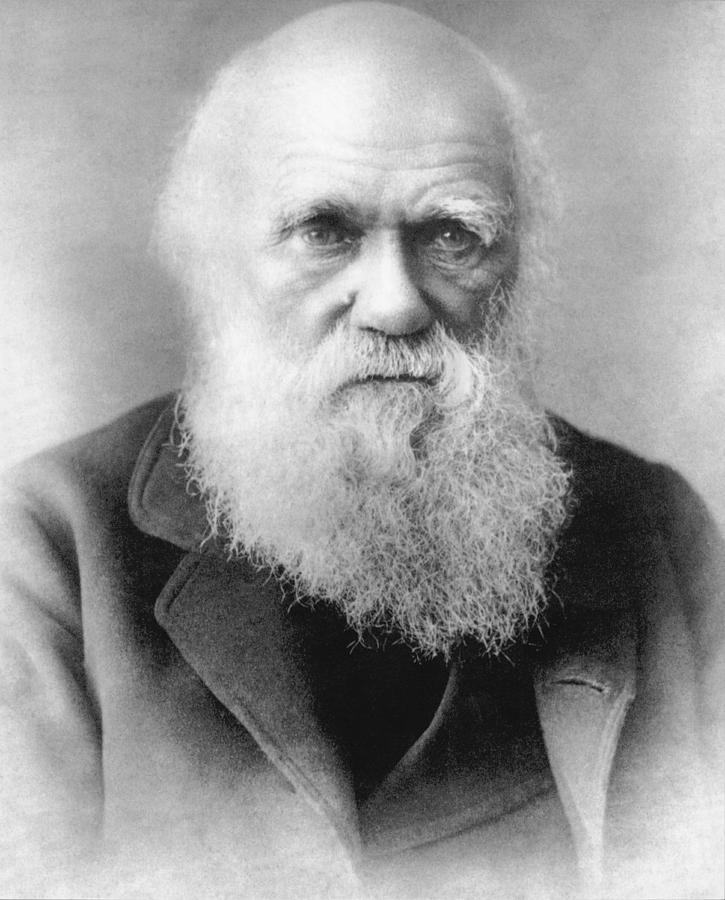 1875 Photograph - Portrait Of Charles Darwin by Underwood Archives