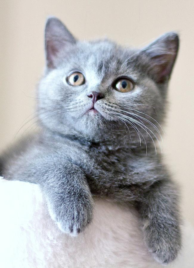 Portrait Of Cute Cat Photograph by Ozcan Malkocer