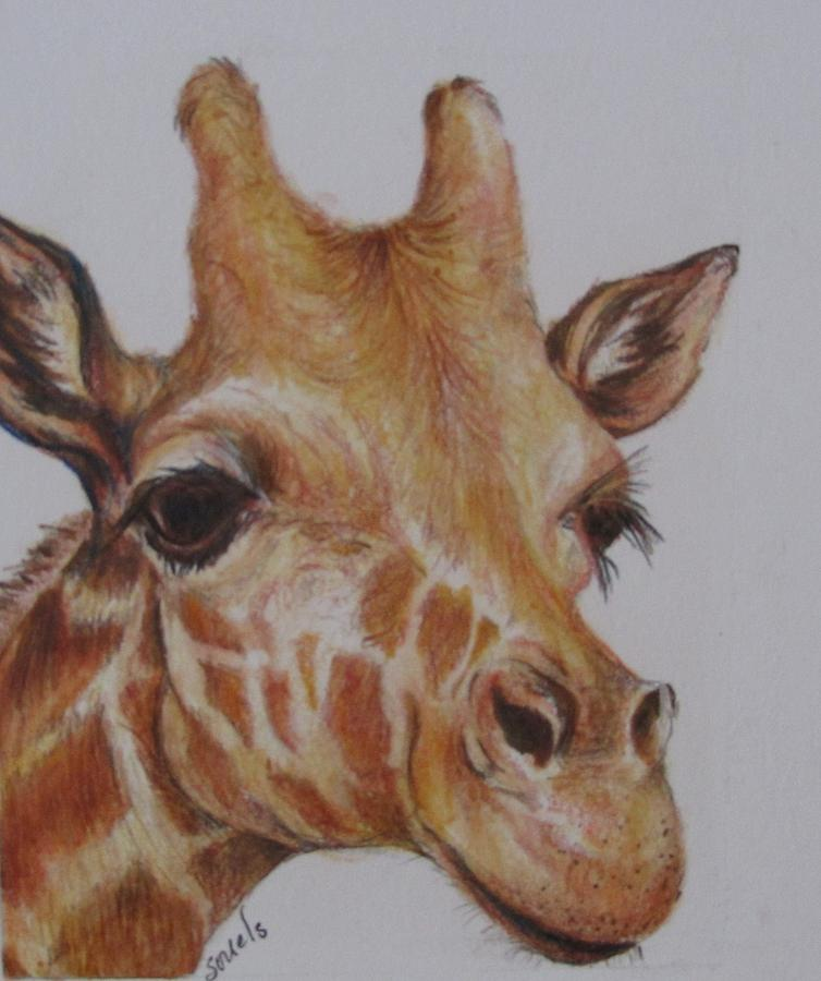 Portrait of Giraffe by Sharon Sorrels