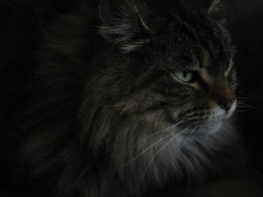 Cat Photograph - Portrait Of Gypsy by Daniel Warren