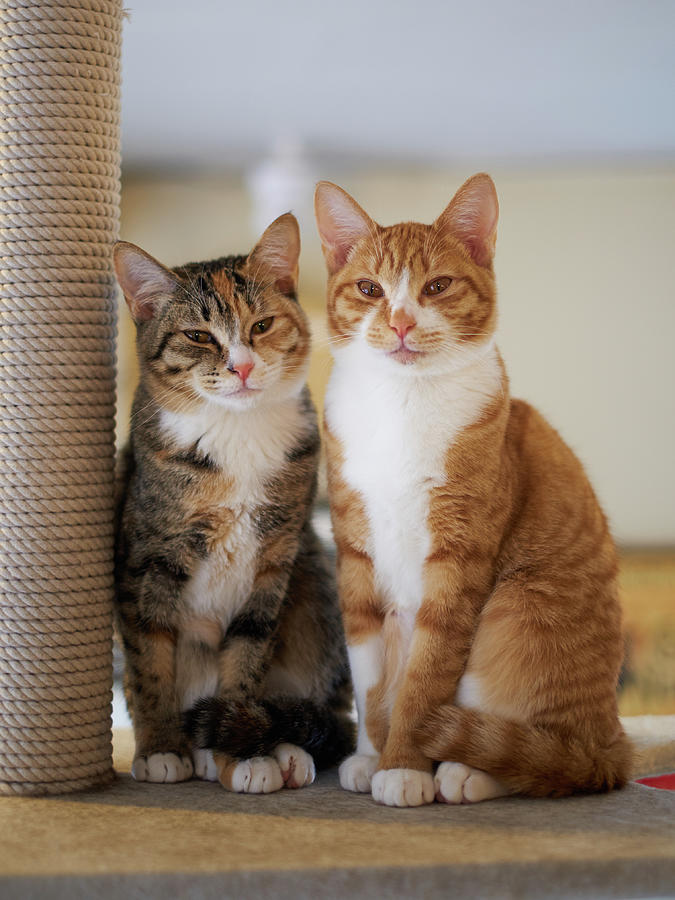 Portrait Of Two Young Cats Photograph by Akimasa Harada