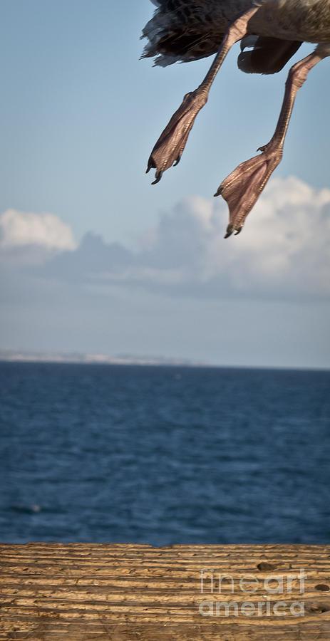 Seagull Photograph - Portrait to be by Agata Wisniowska