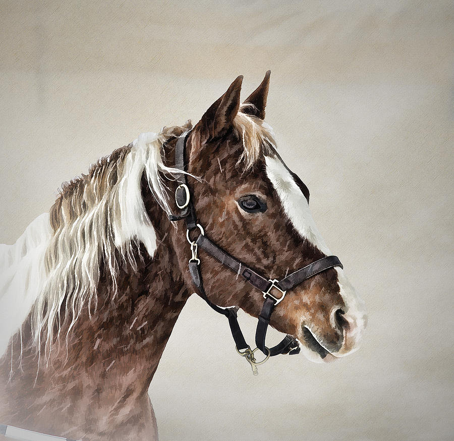 Horse Photograph - Posed by Gary Smith