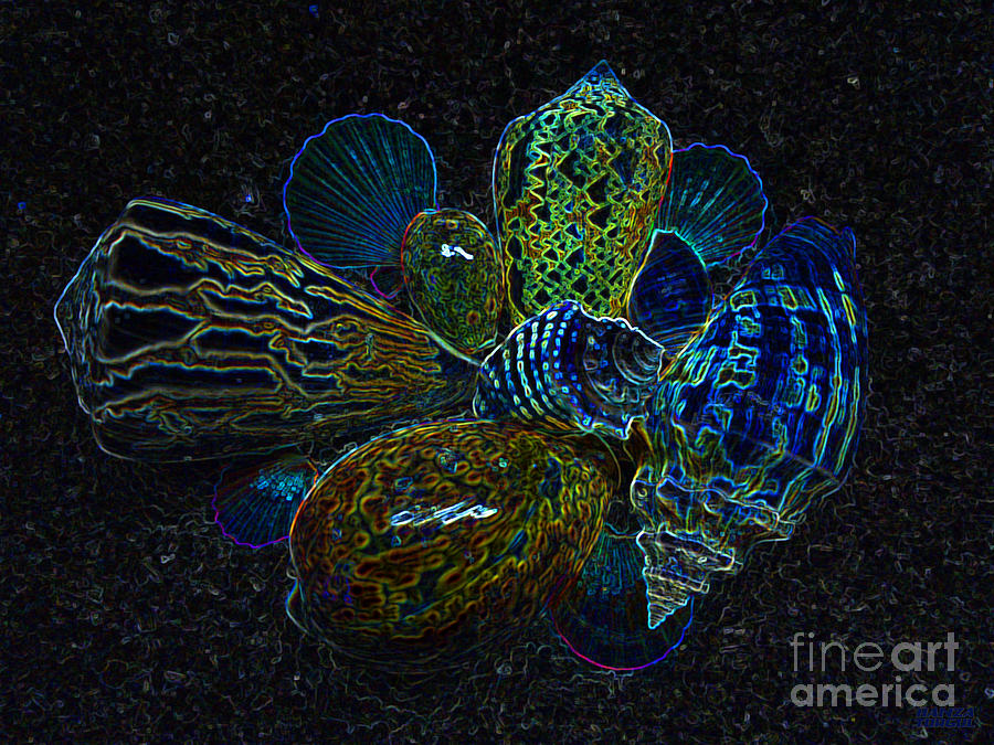 Mystic Photograph - Positive Energy Seashells - Lucky Black Series by Hanza Turgul