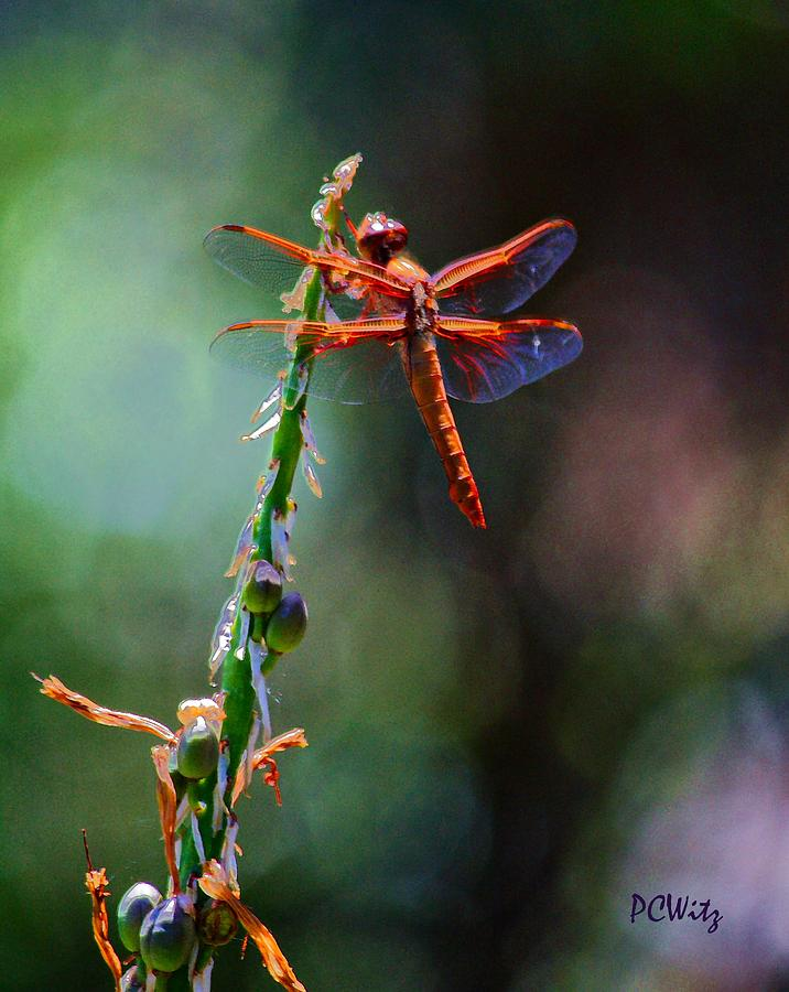 Red Dragonfly Photograph - Positive Forces by Patrick Witz
