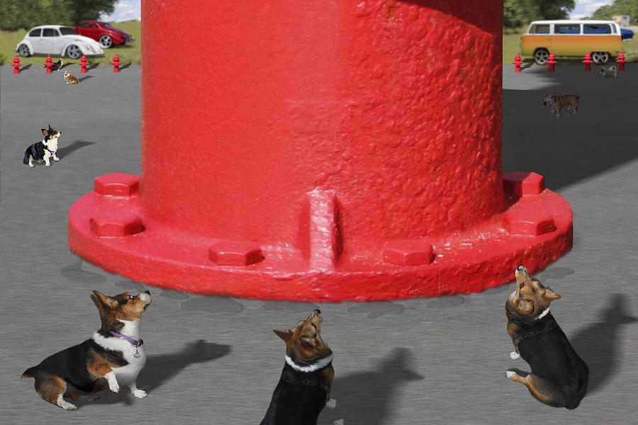 Corgis Photograph - Postcards From Otis - The Hydrant by Mike McGlothlen