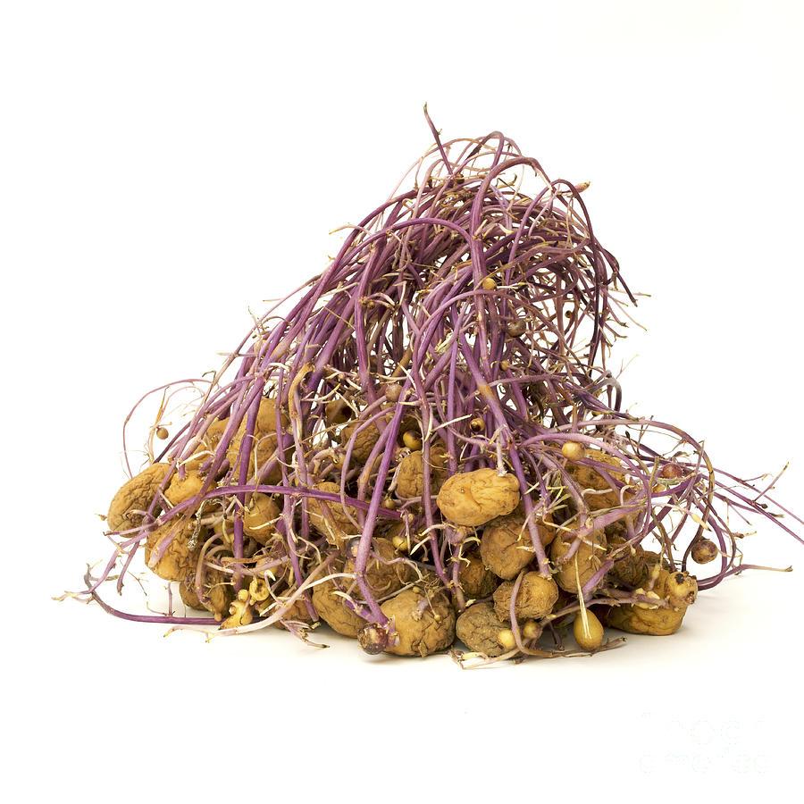 Cut Out Photograph - Potato by Bernard Jaubert