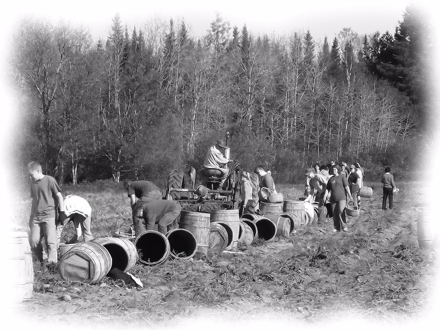 Potato Harvest Photograph - Potato Harvest 21 by Gene Cyr
