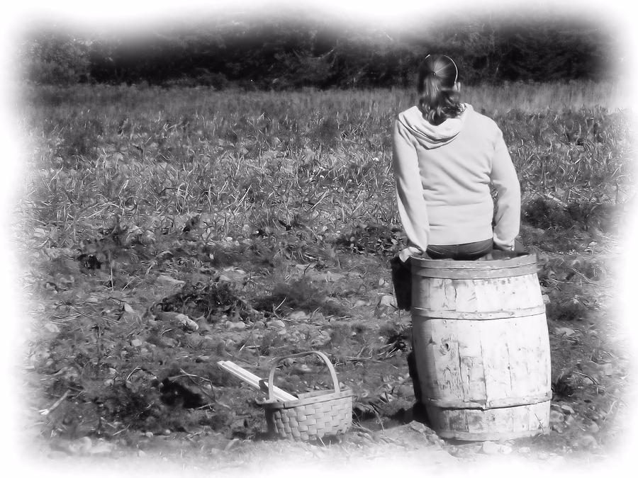 Potato Harvest Photograph - Potato Harvest 9 by Gene Cyr