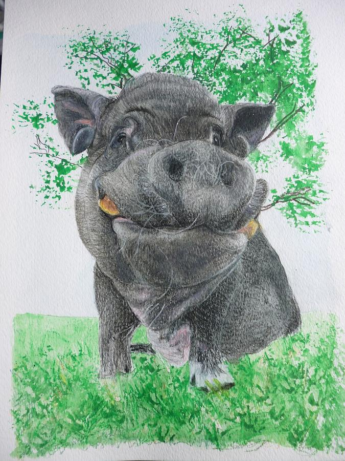Pig Painting - Potbellied Pig Pet Portraits Watercolor Memorial Made To Order 5x7 Inch by Shannon Ivins