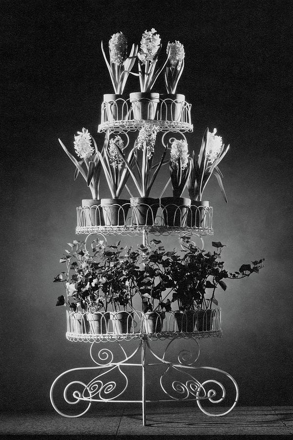 Potted Flowers On A Wrought Iron Stand Photograph by The 3